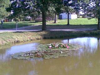 Návesní rybník
