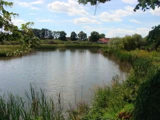 Zátoka rybníku Dvořiště