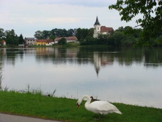 Pohled na kostel přes Bošilecký rybník