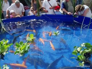 Fotogalerie Rybářských slavností 2007 a 2008