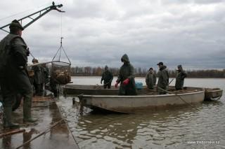Pohled na práci třeboňských rybářů při výlovu rybníka Svět v roce 2006.