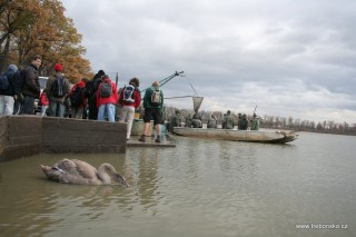 Výlov rybníka Svět v roce 2006 sledují nejen zvídaví diváci, ale připluly i labutě.