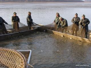 Síť připoutána ke kůlům (tzv. puntovací) a je dále vytahována rybáři, aby ryba zhoustla čili vyjádřila se.