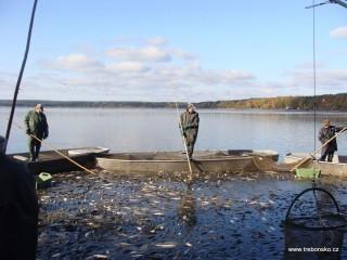Další snímek z výlovu rybníka Dvořiště 2009.