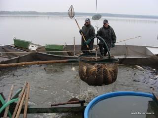 Velký keser právě nabral další várku ulovených ryb.