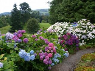 Zahrada fotografa Chlouby