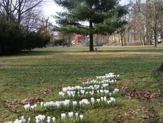 Jaro v Komenského sadech