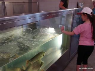 Prodejna živých ryb na třeboňských sádkách Rybářství