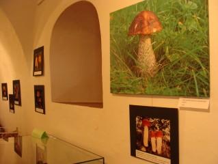 Výstava hub v Zámecké galerii