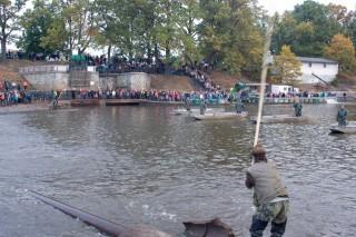 Plašení ryby, aby sestoupila do sítě