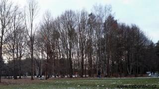 Prosinec 2017 v parku