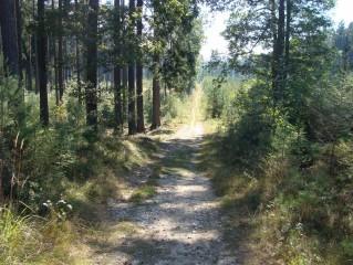 Kolem Petříkova jsou lesy s turistickými stezkami
