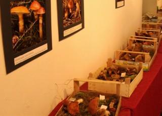 Výstava třeboňských hub