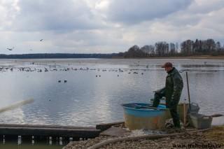 Opatovický rybník, jarní výlov 2018